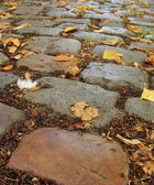 Renkli arnavut kaldırımı taşları ile sonbahar yaprakları ve 1 beyaz tüy — Stok fotoğraf