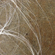 Photo: White hair like fibers on brown stone grunge pavement backgrou