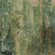 Painted green timber wood grunge background — Stock Photo