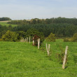 Stock Photo: Idyllic sloping landscape in summer with barbwire fence tree