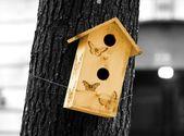 Butterfly's house — Foto de Stock
