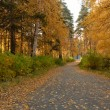 Stock Photo: Autumn alley at park