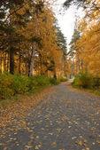 Autumn alley at park — Stock Photo