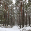 Winter forest — Stock Photo #3679405