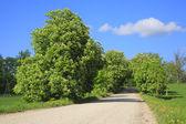 Chestnut avenue. — Stock Photo