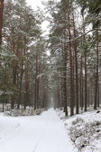 Зимний лес — Стоковое фото