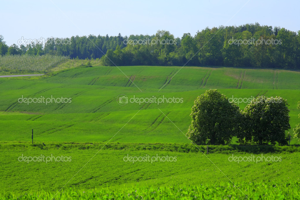 Landscape grass sky. — Stock Photo #3673200