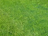 Green seaweed on waterline. — Stock Photo