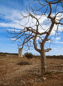 Abandoned tower. Giovinazzo. Apulia. — Stock Photo
