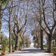 Stock Photo: Public park. Trani. Apulia.