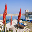 Panoramic view of Giovinazzo seaport. — Stock Photo