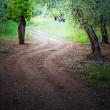 Wooded Avenue. — Stock Photo #3070714