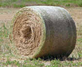 Rolling haystack. — Stock Photo