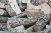 Cut trunks stacked. — Stock Photo