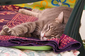 Dozing Cat. — Stock Photo