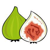 Fresh figs. — Stock Vector