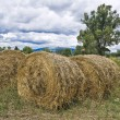 Rolling haystacks. — Stock Photo