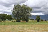 Rolling haystacks. — Stock Photo