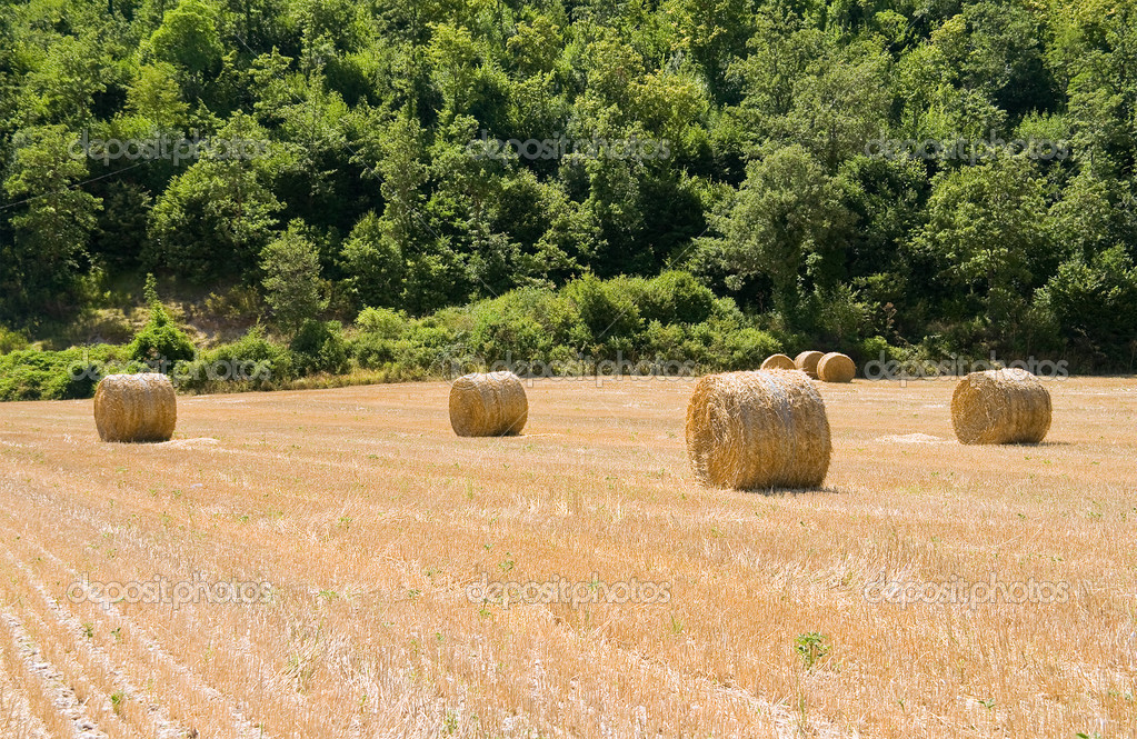 Rolling haystack in countryside. — Stock Photo #3737115