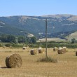 Rolling haystacks in countryside. — Stock Photo