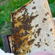 Stock Photo: Working bees on honeycells
