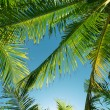 Leaves of palms — Stock Photo