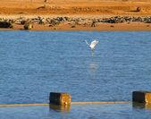 Bird white — Zdjęcie stockowe