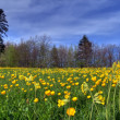 Lawn in spring — Stock Photo #3060771