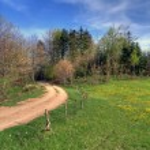 Lawn in spring — Stock Photo