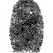 Stock Vector: Fingerprint / vector