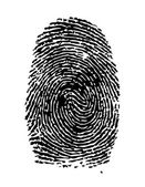 Fingerprint / vector — Stock Vector