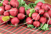 Bunch of fresh radish — Stock Photo