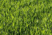 Natural green grass — Stockfoto