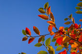 Multicolored leaves — Stock Photo