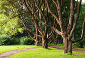 Branched trees in the park. — Stock Photo