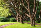 Vertakte bomen in het park. — Stockfoto