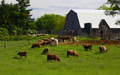 Ontario Cattle Farm — Stock Photo