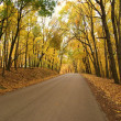 Golden Autumn Drive — Stock Photo