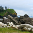 Driftwood View of Cape Disappointment — Stock Photo