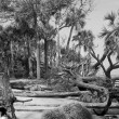 Hunting Island Beach After Hurricane — Stock Photo