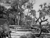 Hunting Island Beach After Hurricane — Foto Stock