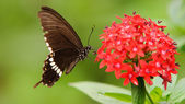 Flying butterfly — Stock Photo