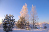 Snow winter tree — Stockfoto