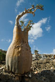 Socotra 350 — Stock Photo
