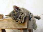 Cat sleeping on a wooden bench — Stock Photo