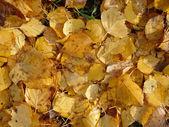Autumn Leaves Texture — Stock Photo