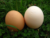 Fresh hen's eggs — Stock Photo
