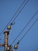 Insekten, die sitzen an den kabeln der elektrischen stromleitung — Stockfoto