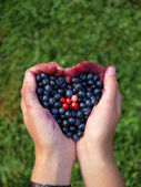 Hands full of berries — Stock Photo
