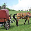 Horse-drawn vehicle — Stock Photo #3097792